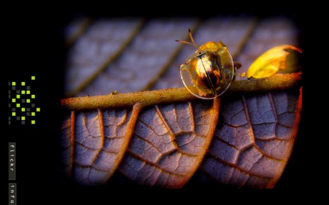 Natural Photography<br>{ Web Site - Photo Portfolio }